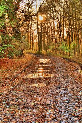 An Autumn Track Art Print by Dave Woodbridge