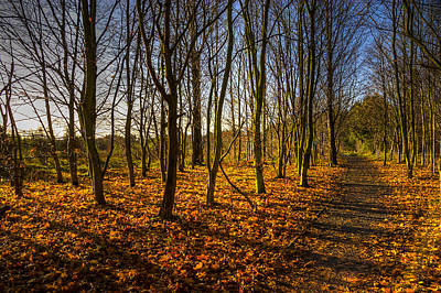 Photograph - An Autumn Walk by Ross G Strachan