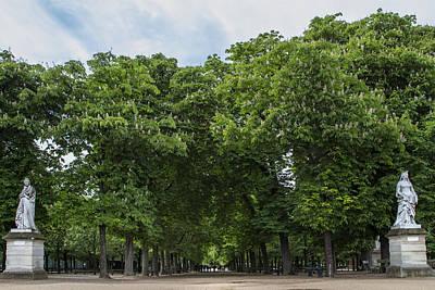 An Avenue Of Green Trees In Paris Art Print