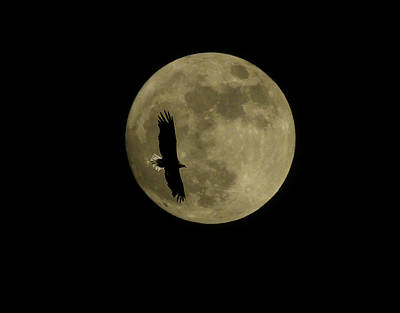 Photograph - An Eagle And The Moon by Mark Alan Perry