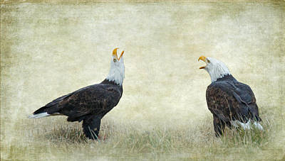 Eagle Photograph - An Eagle Duet by Angie Vogel