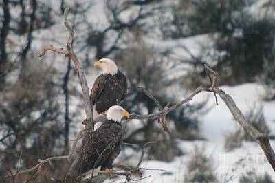 Birds Rights Managed Images - An Eagle Pair  Royalty-Free Image by Jeff Swan