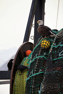 An Eagle Sits On The Fishing Nets On A Art Print by Marion Owen / Design Pics