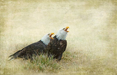 Eagle Photograph - An Eagles Song by Angie Vogel