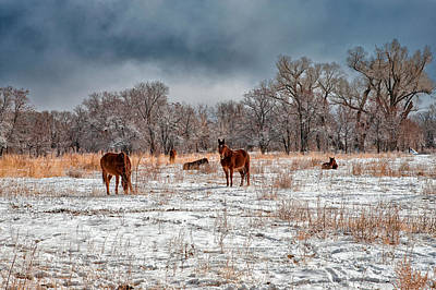 Mule Photograph - An Early Winter Morning by Cat Connor
