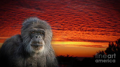Photograph - An Elderly Chimp At The End Of A Day  by Jim Fitzpatrick