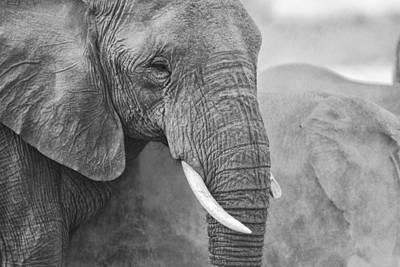 An Elephant Never Forgets Art Print