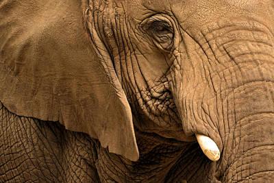 Photograph - An Elephant's Eye by Nadalyn Larsen