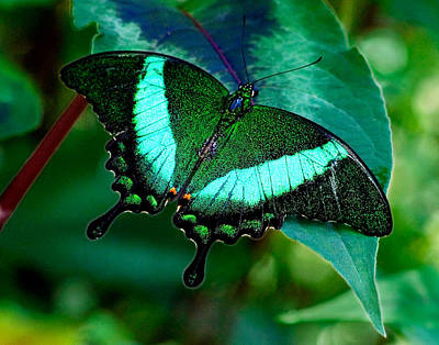 Photograph - An Emerald Beauty by Karen Stephenson
