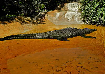 Photograph - A Giant Alligator On Display by Kirsten Giving