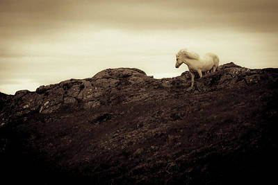 Photograph - An Icelandic Horse At The Base by Bill Marr