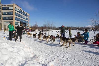 An Iditarod Racer In Anchorage Art Print by Tim Grams