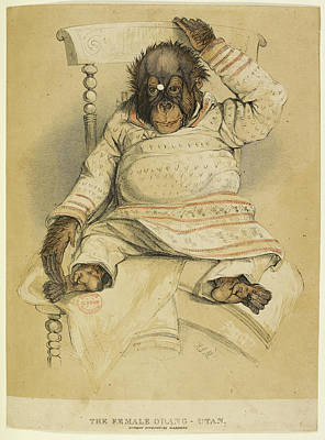 Etc. Photograph - An Illustration Of An Orangutan by British Library