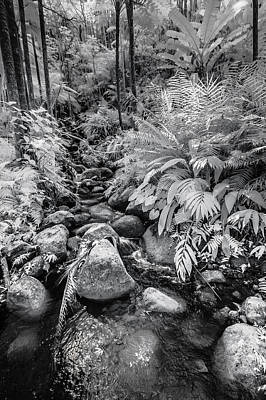 Photograph - An Infrared Stream by Jason Chu