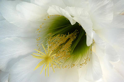 Art Print featuring the photograph An Inside View by Cindy McDaniel