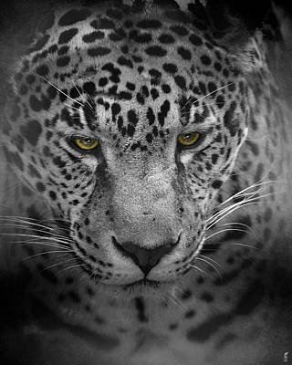 Photograph - An Intense Stare - Wildlife - Leopard by Jai Johnson