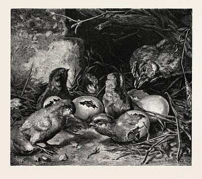 Crisis Drawing - An Interesting Crisis by Gustav S?s (also Konrad Gustav S??, 1823 - 1881), German