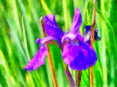 Digital Art - An Iris At My Mother-in-laws by Digital Photographic Arts