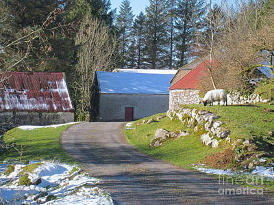 Photograph - An Irish December by Suzanne Oesterling
