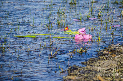 Photograph - An Offering Of Roses In Lake Huron by Deborah Smolinske