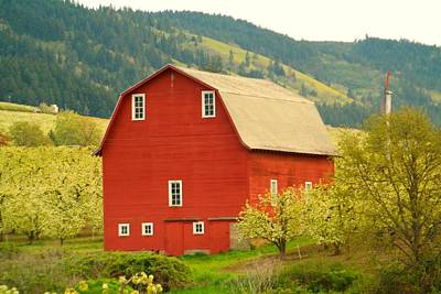 Birds Rights Managed Images - An Old Barn In Odell Oregon Blossoms Royalty-Free Image by Jeff Swan