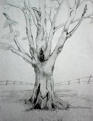 Drawing - An Old Tree by Stacy C Bottoms