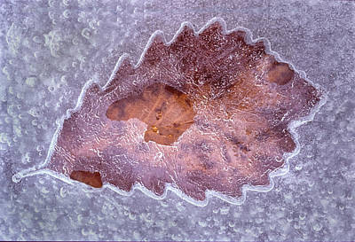 Photograph - An Opening For The Frozen Leaf by Gary Slawsky