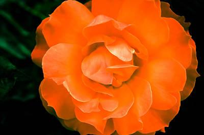 An Orange Rose Art Print by Ronda Broatch