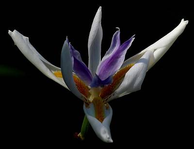 Photograph - An Orchid by Elery Oxford