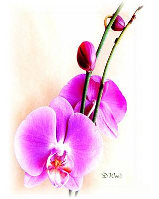 An Orchid For You Art Print by Doris Wood