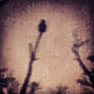 Skylines Wall Art - Photograph - An Owl Perched At The Very Top Of A by Genevieve Esson