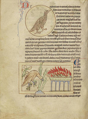 Phoenix Drawing - An Owl,  Phoenixes Unknown England by Litz Collection
