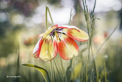 Photograph - An Umbrella Flower by Stwayne Keubrick