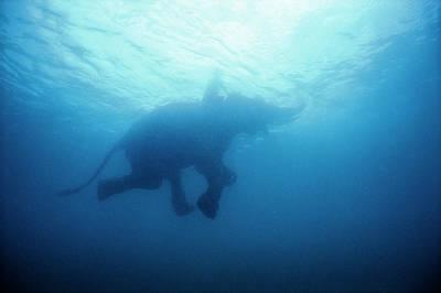 An Underwater View Of An Elephant Art Print