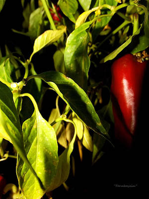 Photograph - Anaheim Pepper by Harold Farmboyzim Zimmer