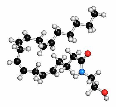 Cb1 Wall Art - Photograph - Anandamide Endogenous Cannabinoid Molecule by Molekuul/science Photo Library
