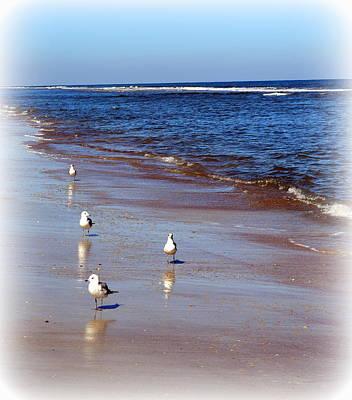 Photograph - Anastasia Beach Seagulls  by Sheri McLeroy