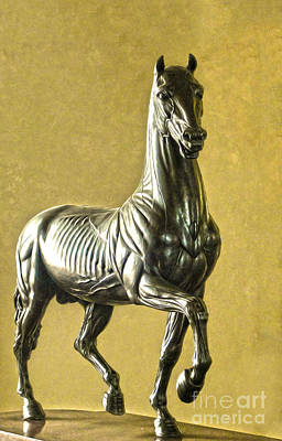 Digital Art - Anatomical Horse by Gregory Dyer