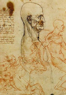 Anatomical Study Of A Man's Head Art Print by Leonardo da Vinci