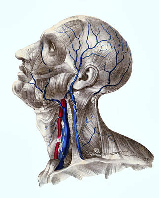 Human Head Digital Art - Anatomium Summus by Daniel Hagerman
