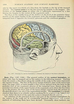 Human Brain Painting - Anatomy Human Body Old Anatomical 126 by Boon Mee