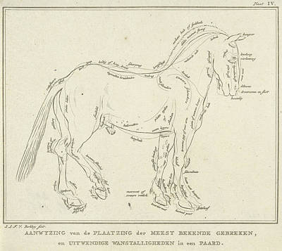 Anatomy Of Horse With Possible Defects In Physique Art Print