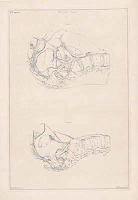 Human Skeleton Drawing - Anatomy Of The Pelvis, With Numbers, Jacob Van Der Schley by Jacob Van Der Schley