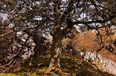 Tree Photograph - Ancestral Tree by Roman Solar