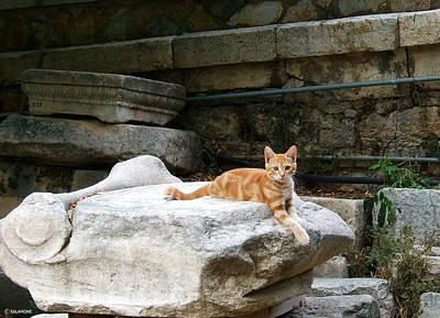 Photograph - Ancient Agora Kitty by Brenda Salamone