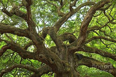Photograph - Ancient Angel Oak by Adam Jewell