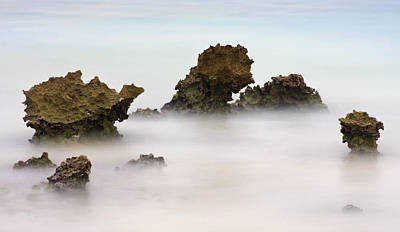 Abstract Beach Landscape Photograph - Ancient Coral by Adam Romanowicz