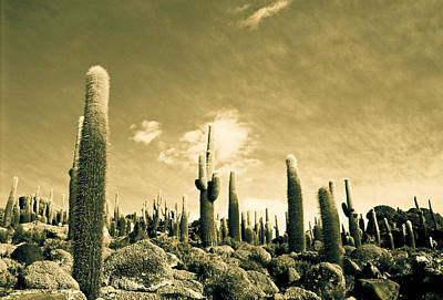 Art Print featuring the photograph Ancient Giants by Lana Enderle