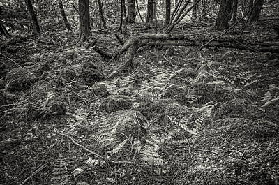 Photograph - Ancient Grove by Alan Norsworthy