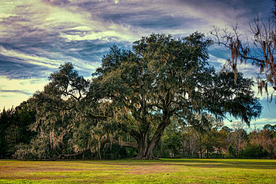 Photograph - Ancient Live Oak 2 by Lewis Mann